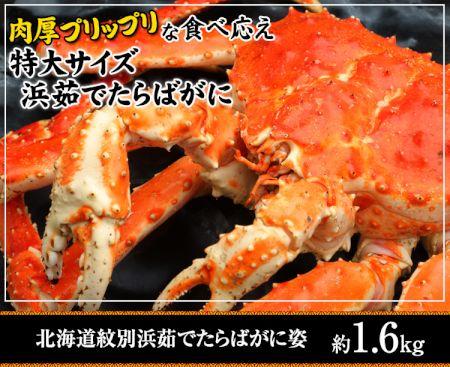 かに本舗:北海道紋別浜茹でたらば蟹姿 約1.6kg