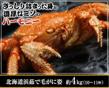 かに本舗:北海道浜茹で毛蟹姿 約4kg(10~11杯)