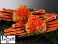 かに本舗:北海道紋別浜茹で ずわい蟹姿 2杯(約1.5kg)