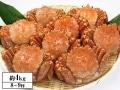 かに本舗:北海道浜茹で毛蟹姿 約4kg (8~9杯)
